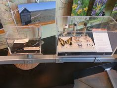 Would love easily moveable boxes where we could temporarily display our non-touchable museum specimens on rotating basis. Nature Center, Center Ideas, Design Museum, Exhibit, Discovery, Boxes, Cabin, Display, Touch