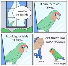 Post with 5407 votes and 138747 views. Tagged with funny, art, truth, aaaaaaaaaaaaaaaaaaaaaaaaa, birbs; Funny Animal Memes, Funny Animal Pictures, Cute Funny Animals, Cute Cats, Funny Memes, Funny Birds, Cute Birds, Bird Drawings, Animal Drawings