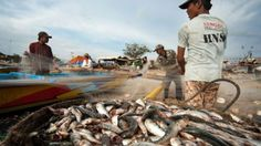 #Nestlé admits #slavery and coercion used in catching its seafood - Business - CBC News