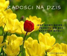Nick Vujicic, Motto, Abs, Humor, Motivation, Night, Biblia, Good Morning Funny, Poster