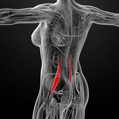 Why Your Psoas Muscl