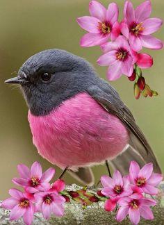Cute Birds, Pretty Birds, Exotic Birds, Colorful Birds, Tropical Birds, Exotic Pets, Beautiful Creatures, Animals Beautiful, Animals And Pets