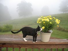 take time to smell the flowers ...