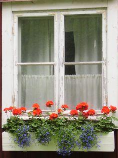 favorite window box combo - red geraniums and blue lobelia