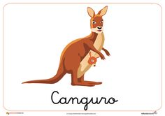 Fichas de Animales Salvajes: Canguro