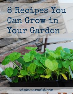 8 Recipes You Can Grow in Your Garden from @vicki_arnold blog