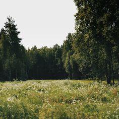 83 個讚,1 則留言 - Instagram 上的 Ellen Tyn(@liskin_dol):「 Не хватит слов, чтобы описать переливчатый летний луговой аромат. К нему примешивается лесной запах… 」