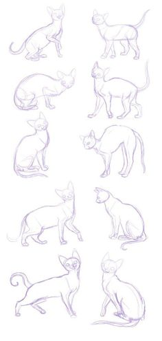34 New Ideas Drawing Tutorial Cat Sketch Drawing Tips, Drawing Sketches, Cat Drawing Tutorial, Sketching, Drawing Ideas, Cat Reference, Drawing Reference, Anatomy Reference, Gesture Drawing