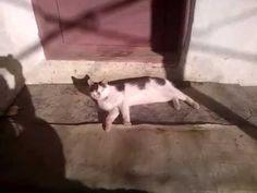 Pisica si cainele....!!! Dogs, Animals, Animales, Animaux, Doggies, Animal, Animais, Dieren, Pet Dogs