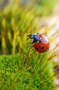 Ladybug by Norbert G on 500px
