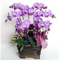 Rangkaian Bunga Anggrek Bulan   Toko Bunga by Florist Jakarta