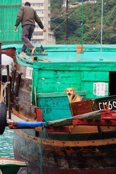 Life in Aberdeen Fishing Village, HK