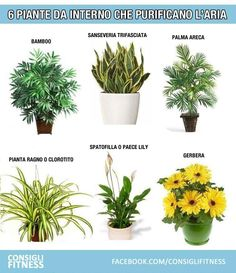 6 piante da interno che purificano l'aria