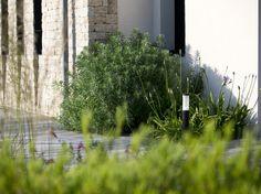 Derrière le plancher de bois, une agapanthe Umbellatus et une euphorbe habillent le pied d'un mur de la maison.