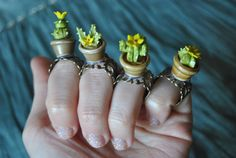 Adjustable ring cactus in a pot - Yellow flower cactus. Ready to ship!! By Sifaka