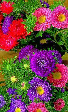 Porque se cuidar, floresce Assim é a vida... Assim são as flores.