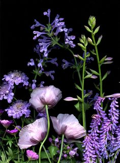 30851 Bouquet (Geranium sanguineum, Scabiosa, Papaver somniferum, Nepeta, Lamium, Hosta, Vicia) by horticultural art