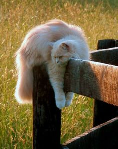Cat, fence, relaxed,