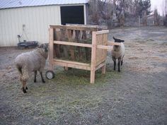 Another view of feeder with handles and wheels Sheep Feeders, Livestock, Wheels, Animals, Animaux, Animales, Animal, Dieren
