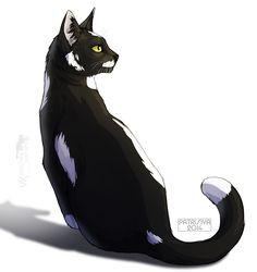 Warriors Cats - Toadstep by Cat-Patrisiya.deviantart.com on @DeviantArt