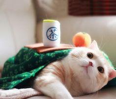 Kotatsu Cat Table Costume by Unihabitat #Cat, #Costume, #Home, #Kitty, #Table