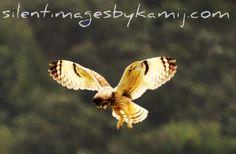 """Hawaiian """"Pueo"""" (owl)"""