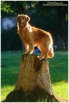 *King of the Mountain  (Corky)