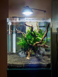 Aquarium Terrarium, Aquarium Set, Planted Aquarium, Terrariums, Betta Tank, Betta Fish, Fish Aquarium Decorations, Goldfish Aquarium, Nano Cube