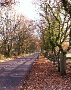 Walking towards Sandhurst