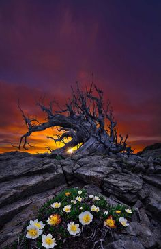 ~Chobbit Hobbit's Nature Corner~ — artofvizuals: The Cerberus of Time byBsam