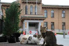 山梨県庁に集まる野良猫。後ろは県議会議事堂