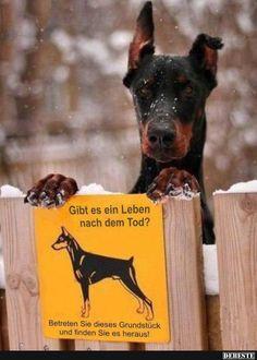 Gibt es ein Leben nach dem Tod? | DEBESTE.de, Lustige Bilder, Sprüche, Witze und Videos