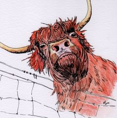 Highland Cow, pen and water colour painting, by K Price Art by KPriceArt on Etsy