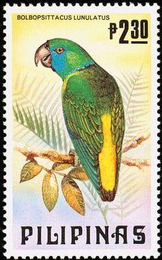 Filipinas -  El Lorito Guayabo o Guayabero es una especie de ave de la familia de los loros endémica de las selvas de Filipinas