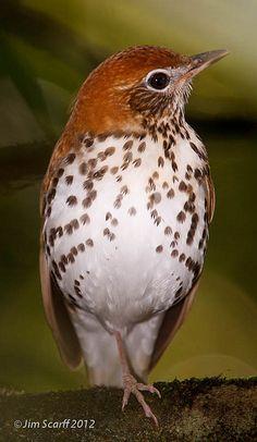 Window Alert Decals Prevent Bird Strikes Bird Strike And Products - Window alert decals for birds
