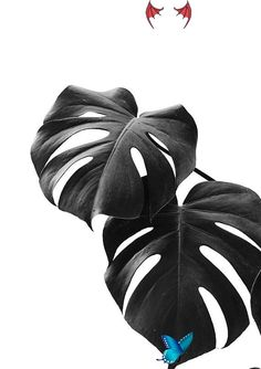 Monstera Print, Tropical Leaf Art, Natural Wall Arts, Nature Poster, Black and White, Inspirational, Monstera Wall Decor,  <br>