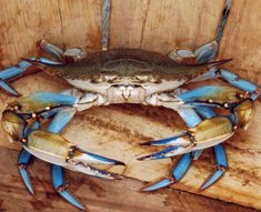 New Seafood Drawing Blue Crabs Ideas Crab And Lobster, Fish And Seafood, Crab Painting, Crab Tattoo, Crab Art, Louisiana Art, Take Off Your Shoes, Beach Art, Ocean Life