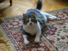 Başak kutlar /my cat Minti