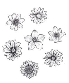 25 Beautiful Flower Drawing Information & Ideas - Brighter Craft - 25 Beautiful . - 25 Beautiful Flower Drawing Information & Ideas – Brighter Craft – 25 Beautiful Flower Drawing - Easy Flower Drawings, Beautiful Flower Drawings, Pencil Drawings Of Flowers, Flower Sketches, Art Drawings Sketches, Beautiful Flowers, Drawing Flowers, Daisy Drawing, Flower Design Drawing