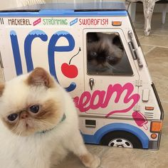 Why should kids have all the fun? OTO Ice Cream Truck is now available in cat size! This little beast looks just like the kid-size one, except that it's small and rocks fish flavors. - Cardboard playh