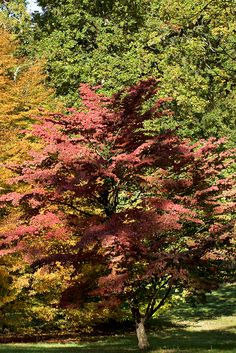 Enjoy the amazing autumn colours at West Dean with the Autumn Pass for £17. 6 weeks entry to the gardens.