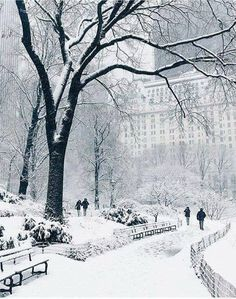 Central Park covered by snow & New York, United States. Photo by Tag someone you love & The post Central Park covered by snow New York, & appeared first on . Winter Szenen, Winter Magic, Winter Time, Winter Christmas, New York Winter, Winter Storm, Winter In Nyc, New York Snow, Prim Christmas