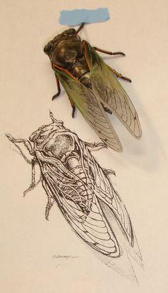 Cicada, by Aaron Horkey