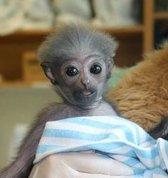 You must be joking!  What do mean I am not a human, but a monkey????????!!!!!