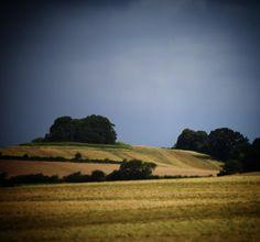 Vestfynsk landskab #visitfyn #fyn #nature #nature_perfection #naturelovers #nofilter #natur #denmark #danmark #dänemark #landscape #assensnatur #assens #mitassens #vildmedfyn #fynerfin #vielskernaturen #visitassens #instapic #picoftheday #sommer #summer2016 #grain