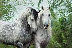 Resultado de imagen de caballos españoles pura sangre