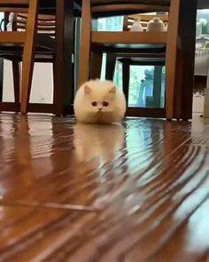Funny Animal Jokes, Funny Cute Cats, Cute Baby Cats, Cute Little Animals, Cute Cats And Kittens, Funny Animal Videos, Cute Funny Animals, Kittens Cutest, Cute Dogs