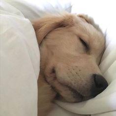 This is exactly how Mia sleeps!