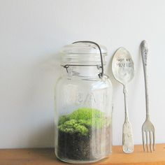 mossy projects1