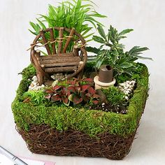 Fairy Foliage Dish Garden - Bring delight and enchantment to any occasion with this whimsical fairy dish garden.